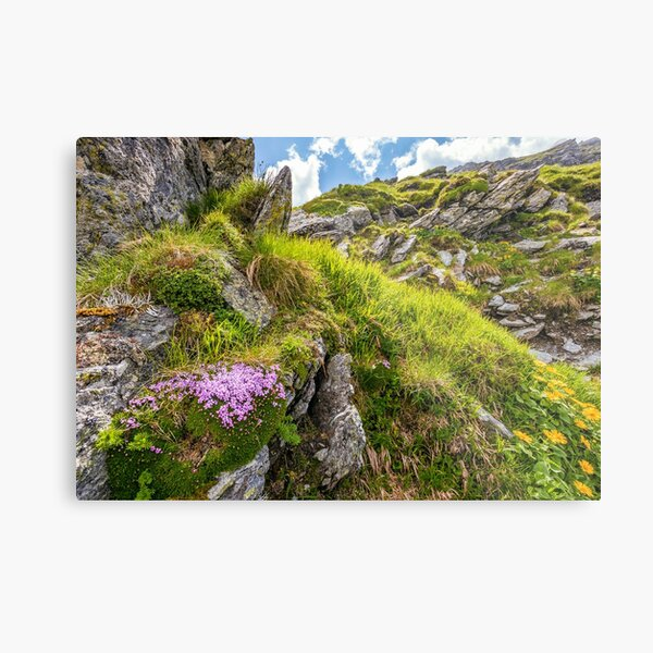 beautiful flowers on Steep slope of rocky hillside Metal Print