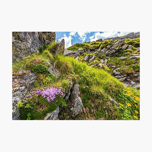 beautiful flowers on Steep slope of rocky hillside Photographic Print