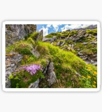 beautiful flowers on Steep slope of rocky hillside Sticker