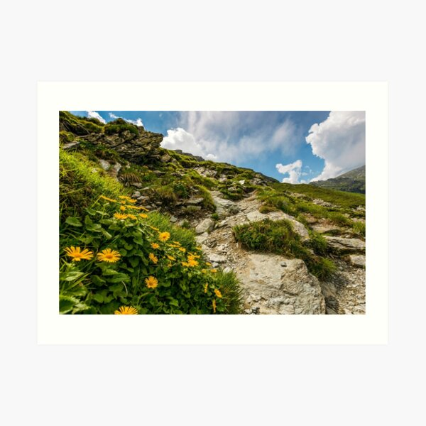 beautiful flowers on Steep slope of rocky hillside Art Print