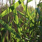 nature leaves Sunny day vivid green reeds by OlgaBerlet