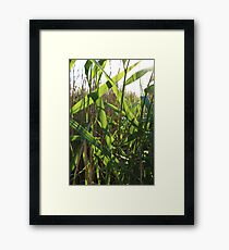 nature leaves Sunny day vivid green reeds Framed Print