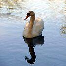 swan  by moonstone