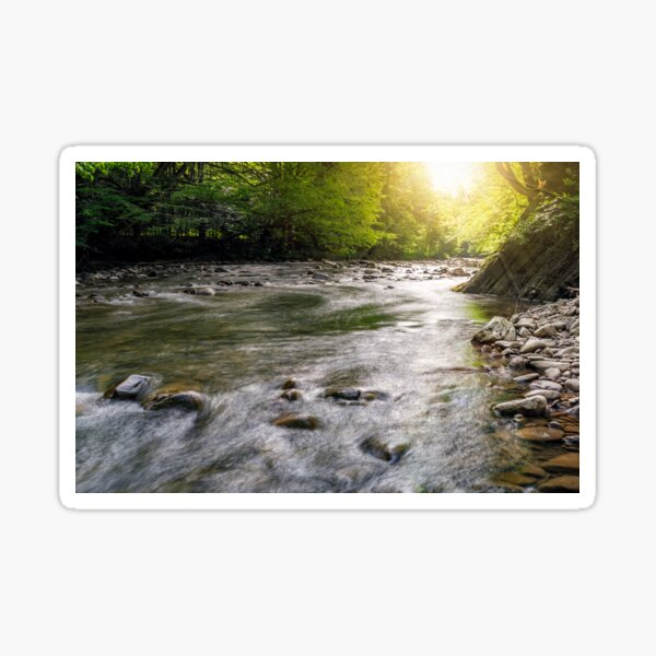 river flow in sunny forest Sticker