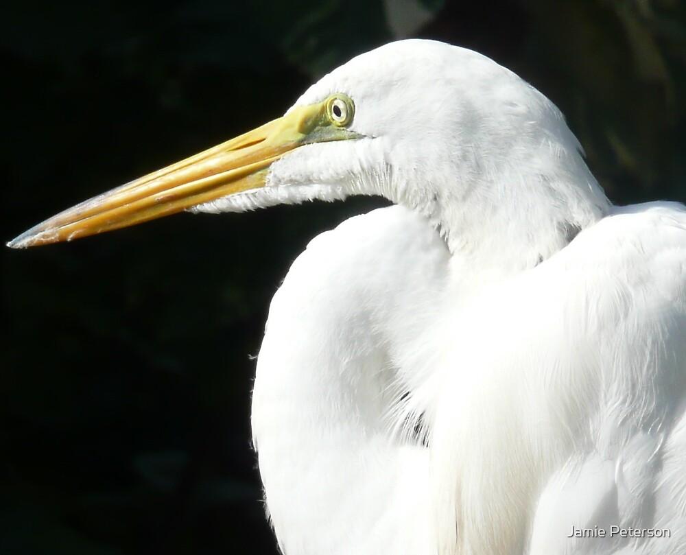 White Egret by Jamie Peterson