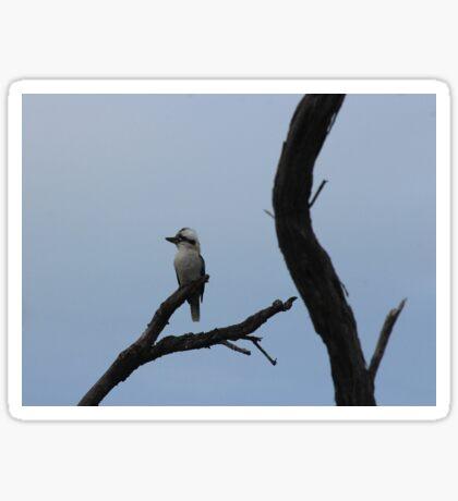 Kookaburra in a Tree Sticker