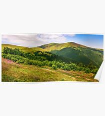 meadow with purple flowers in Carpathian mountains in summer Poster