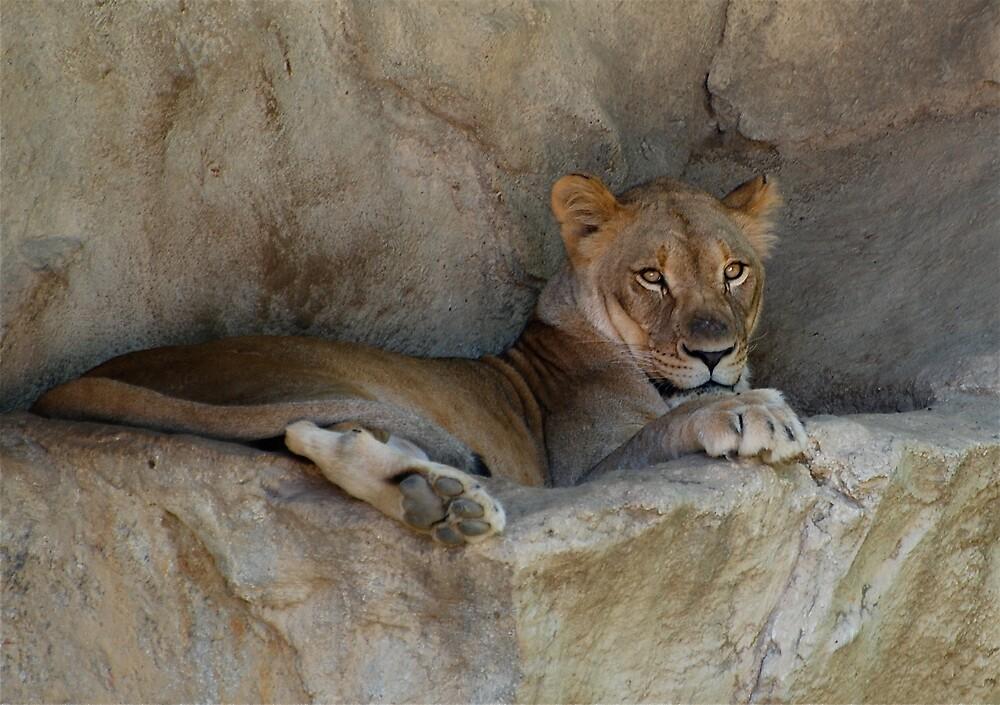 Lion Cub by Jim Caldwell
