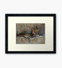 Lion Cub Framed Print