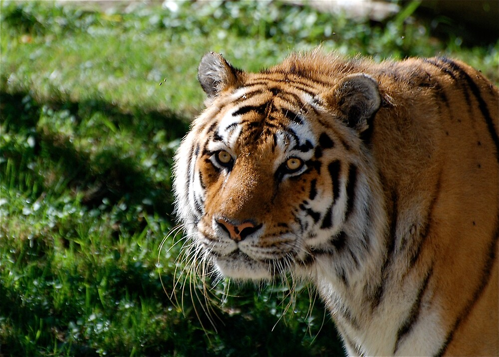Eye of the Tiger by Jim Caldwell