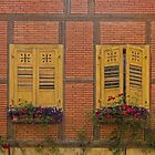 Windows and Roses by Yair Karelic