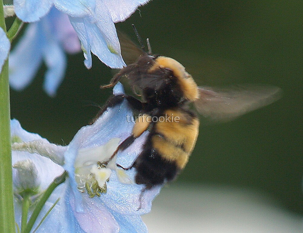 Bumble Bee on Steroids by tuffcookie