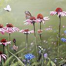 Summerlands by Arie van der Wijst