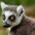 Ring Tailed Lemur Portrait by Ellesscee