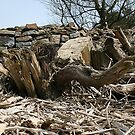 Rotten tree; Rivington Pike by nicholaTisdall