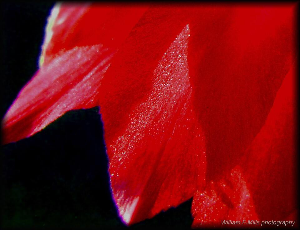 Narrow by William Mills