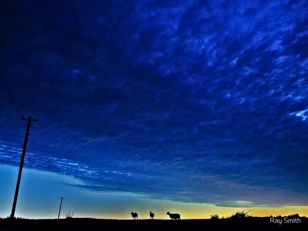 Three Sheep by Ray Smith