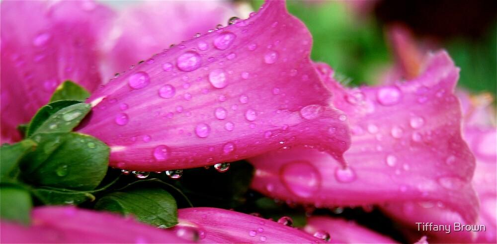 Pretty Pink by Tiffany Brown