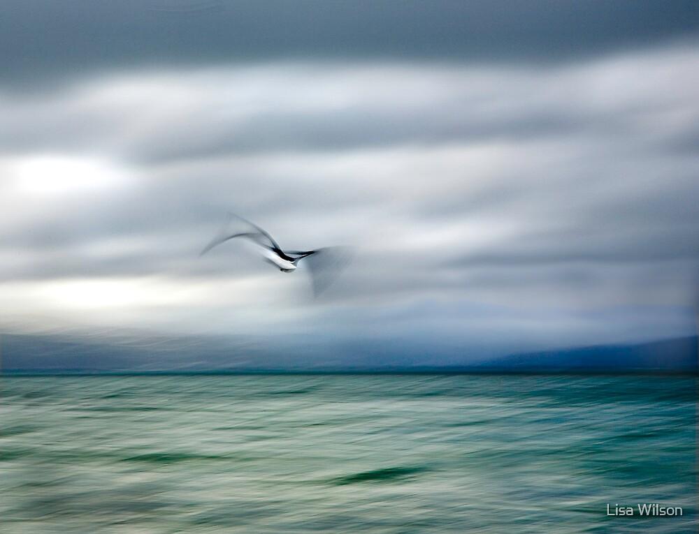 Gull over Wellington Harbour by Lisa Wilson