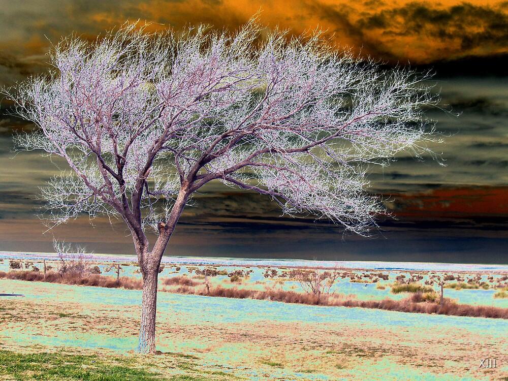 Desert Tree by XIII