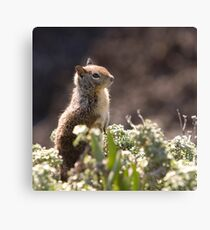 Ground Squirrel with Wild Flowers Canvas Print