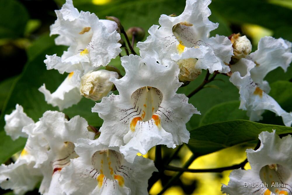 Catalpa in Bloom by Deborah  Allen
