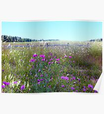 Field of  Thistle Flowers Poster