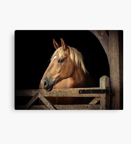 Suffolk Punch Horse Canvas Print