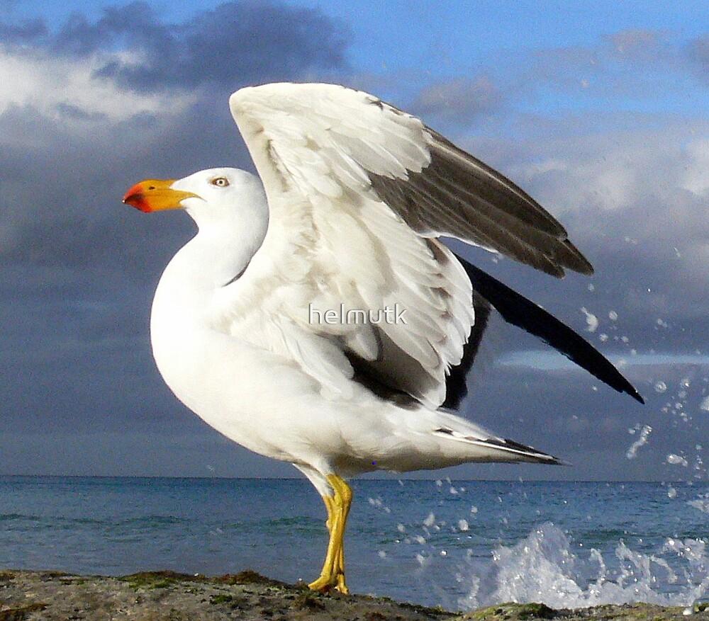 Pacific Gull by helmutk