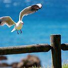 Lifting by Raphaela  Sampaio