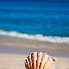 Single Shell by Raphaela  Sampaio