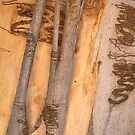 The Tree Bark Collection # 26 - The Magic Tree by Philip Johnson