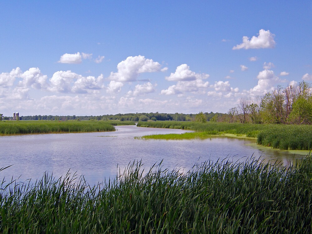 The Marshes by marchello