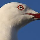 Seagull Stare by Martin Hampson