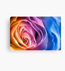 Rainbow Rose Macro Canvas Print
