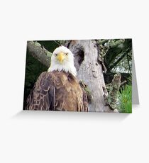 Eye Contact with a Bald Eagle Greeting Card