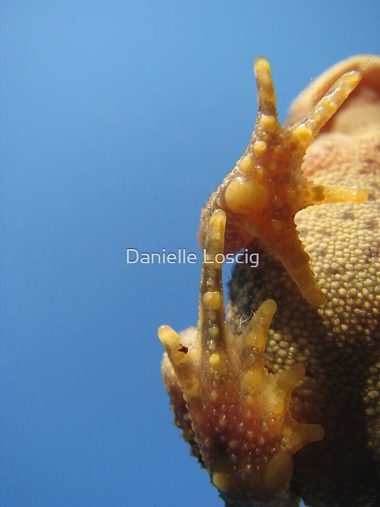 Froggy Feet by Danielle Loscig