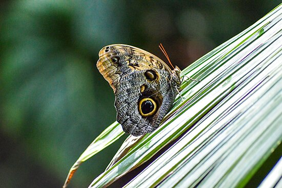 Butterfly at HMNS by Kimberly Tirso