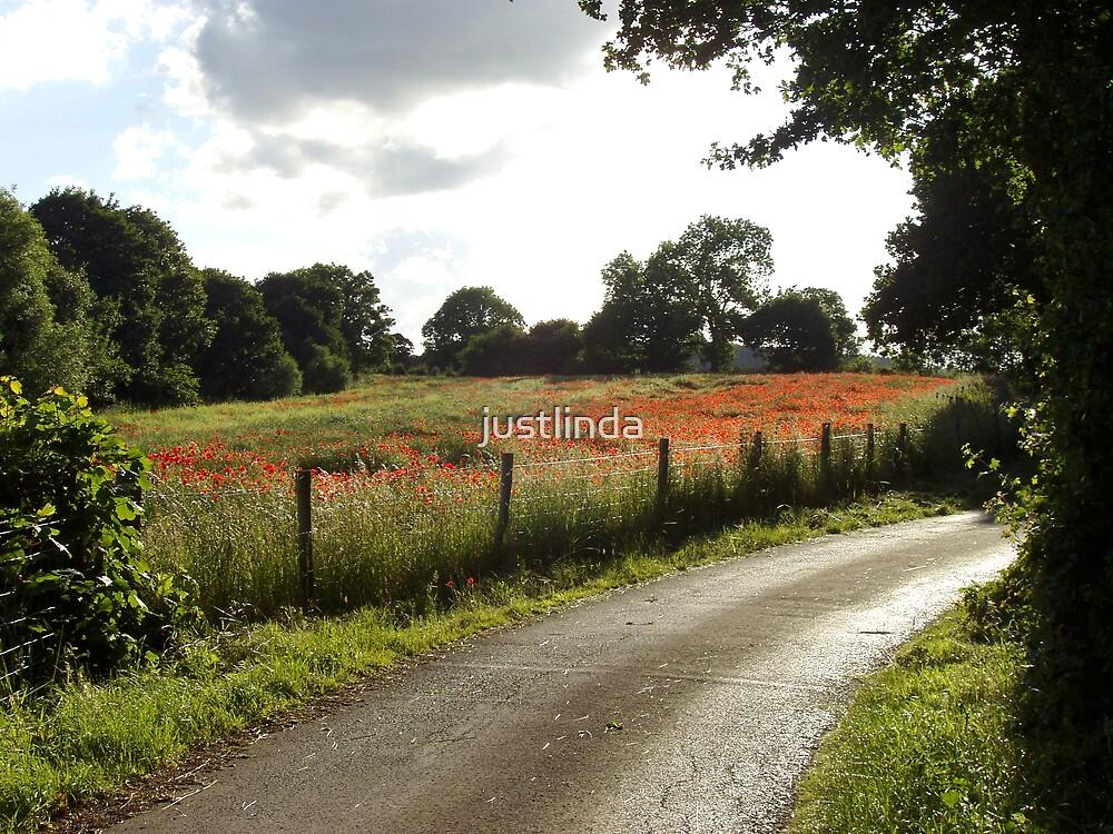 Poppy Field  by justlinda