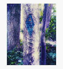 Forest Gnome Home Photographic Print