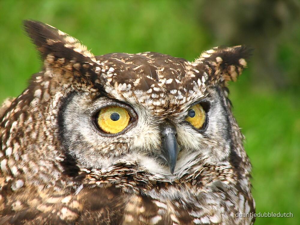 big owl eyes... by daantjedubbledutch