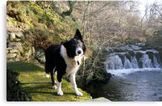 Indy at Nant-Y-Coed by Michael Haslam