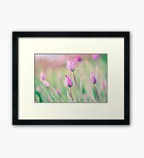 Pink Spring Tulips Framed Print
