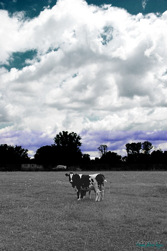 Cow in a Field by Adrena87