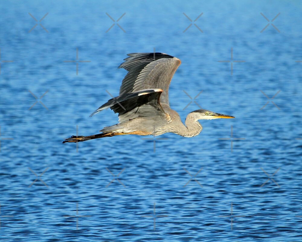 Skimming the lake by Heather King