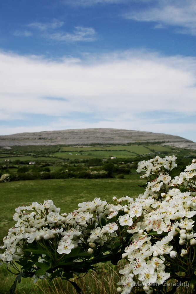 Burren Flowers!  by Maureen  Geraghty