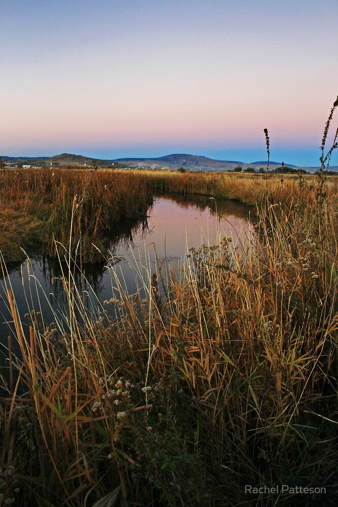 The Marsh by Rachel Patteson