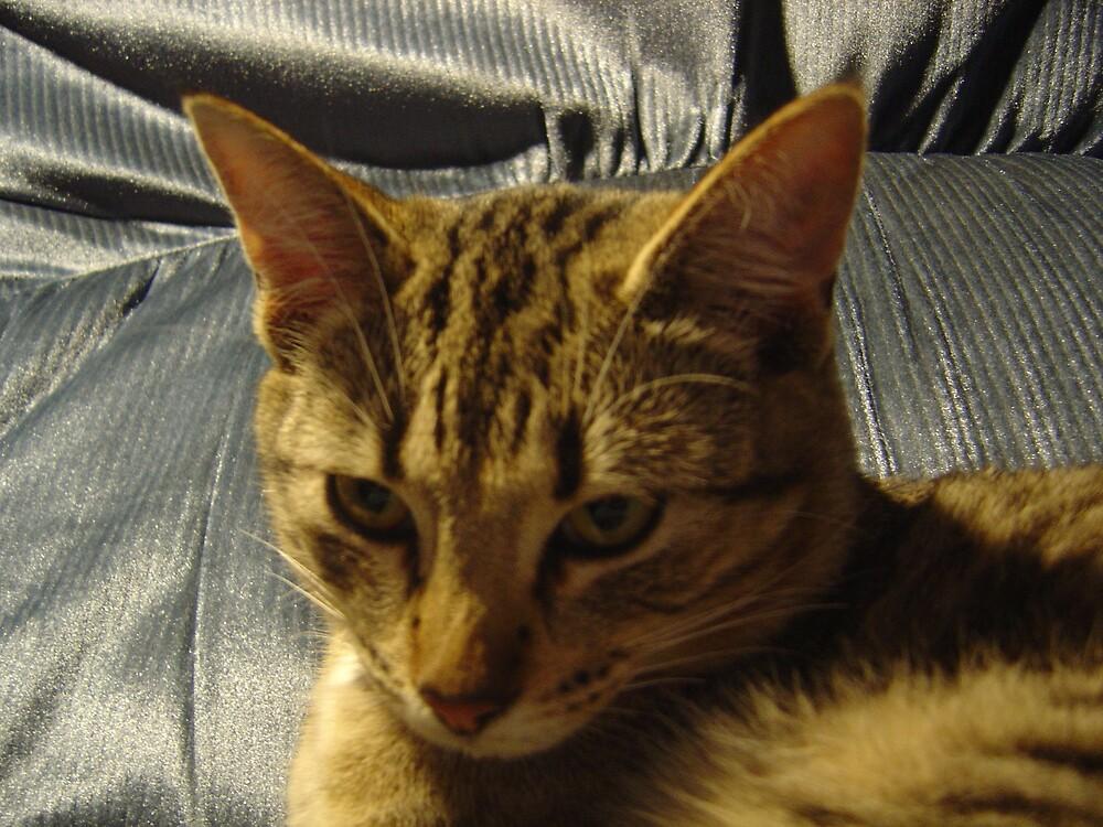 Pensive Cat by Jerry Stewart