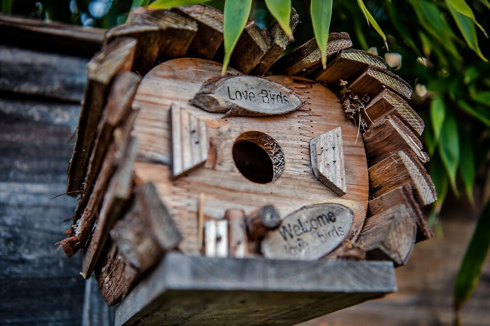 Love Birds by James Galler
