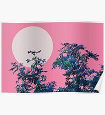 Pink sky and rowan tree Poster